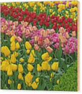 Keukenhof Gardens 72 Wood Print