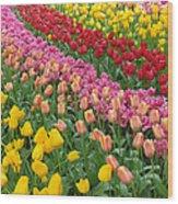 Keukenhof Gardens 74 Wood Print