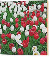 Keukenhof Gardens Panoramic 20 Wood Print