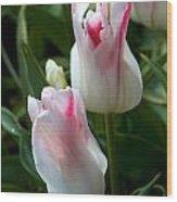 Keukenhof Tulip Buds Wood Print