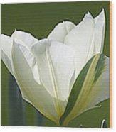 Keukenhof0031 Wood Print