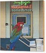 Key West - Parrot Taking A Break At Margaritaville Wood Print