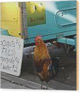 Key West - Rooster Making A Living Wood Print