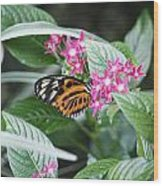 Key West Butterfly Conservatory - Monarch Danaus Plexippus 2 Wood Print