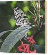 Key West Butterfly Conservatory - Idea Leuconoe Wood Print