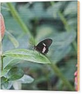 Key West Butterfly Conservatory - In Black White And Orange Wood Print