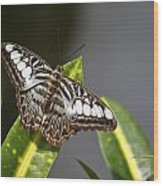 Key West Butterfly Conservatory - In Brown And White Wood Print