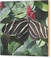Key West Butterfly Conservatory - Zebra Heliconian Wood Print