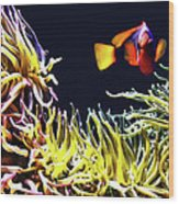 Key West Fish Wood Print