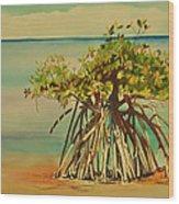 Keys Mangrove Wood Print