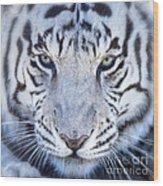Khan The White Bengal Tiger Wood Print