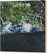 Kickin Back In The Sun Wood Print
