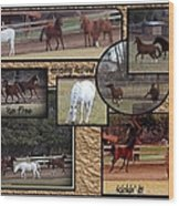 Horses Kickin It  Wood Print