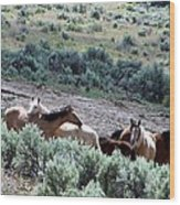 Kiger Mustangs At Mineral And Water Source Wood Print