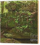 Kildoo Trail Stoned Turtle Wood Print