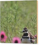 Killdeer And Tennessee Coneflowers Wood Print