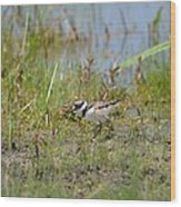 Killdeer Hatchling Wood Print