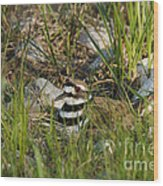 Killdeer Wood Print