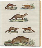 Kinds Of Otters And Marten Wood Print