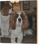 King Charles Dogs Wood Print