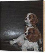 King Charles Puppies Wood Print