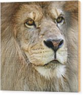 King Of The Beasts Wood Print