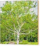 King Of The Birch Wood Print