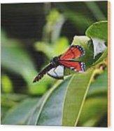 King Of The Butterflies Wood Print