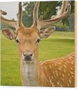King Of The Spotted Deers Wood Print
