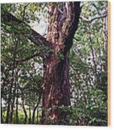 King Of The Timberline Wood Print by Garren Zanker