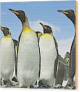 King Penguins Looking Wood Print