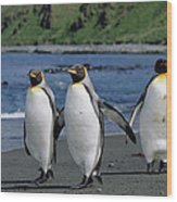 King Penguin Trio On Shoreline Wood Print