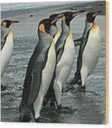 King Penguins Coming Ashore Wood Print