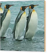 King Penguins Going To Sea Wood Print