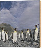 King Penguins On Rocky Beach South Wood Print