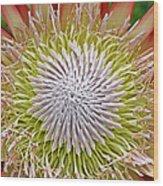 King Protea Flower Macro Wood Print