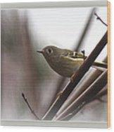 King - Ruby Crowned Kinglet - Bird Wood Print