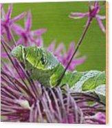 King Swallowtail Caterpillar Wood Print