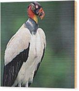 King Vulture In Breeding Colors Wood Print
