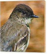 Kingbird Chillin Wood Print