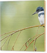 Kingfisher On A Willow Wood Print
