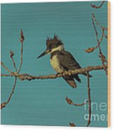 Kingfisher On Limb Wood Print