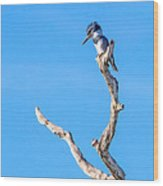 Kingfisher Perch Wood Print