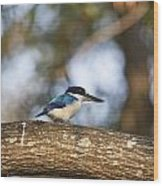 Kingfisher-top-end Australia Wood Print