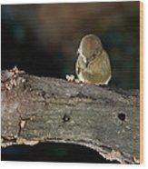 Kinglet On The Feed Wood Print