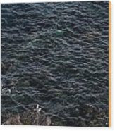 Seagulls At Cliffs Ready To Fish In Mediterranean Sea - Kings Of The World Wood Print
