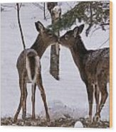Kissing Deer Wood Print