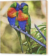 Kissing Rainbow Lorikeets 8 Wood Print by Heng Tan