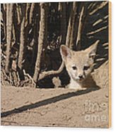 Kit Fox Pup Wood Print