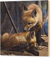 Kit Foxes Wood Print by Thomas Young
